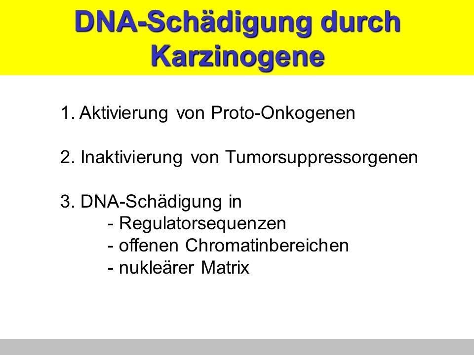 DNA-Schädigung durch Karzinogene