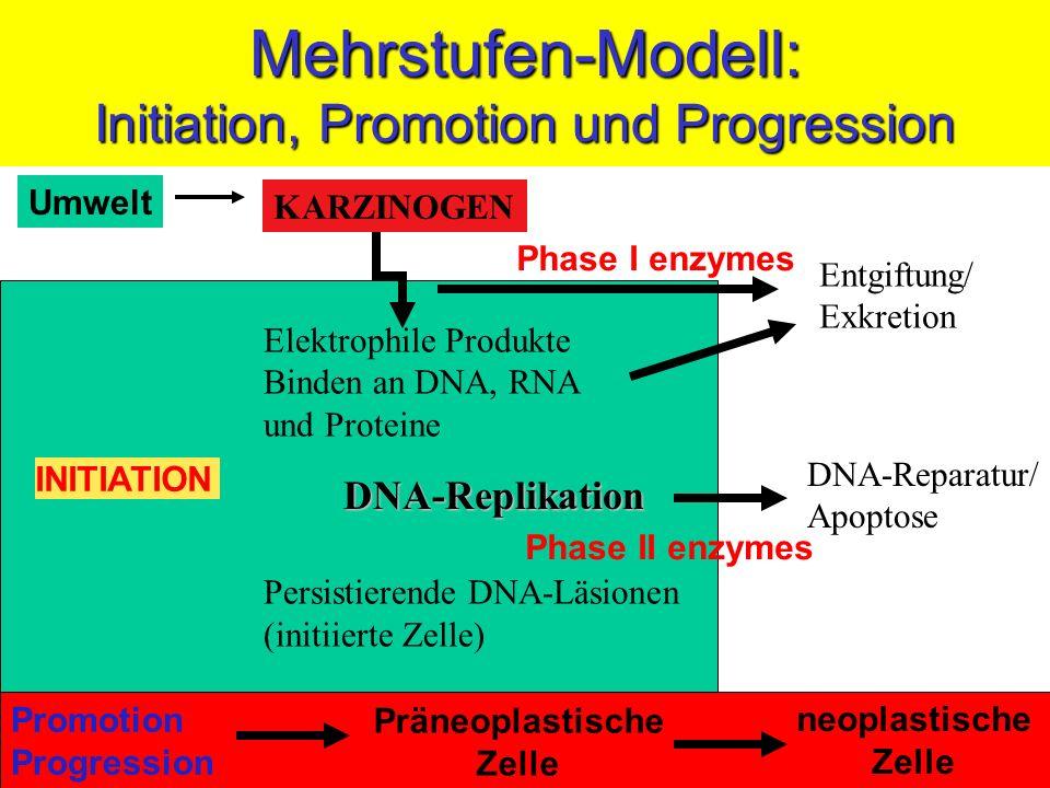 Mehrstufen-Modell: Initiation, Promotion und Progression