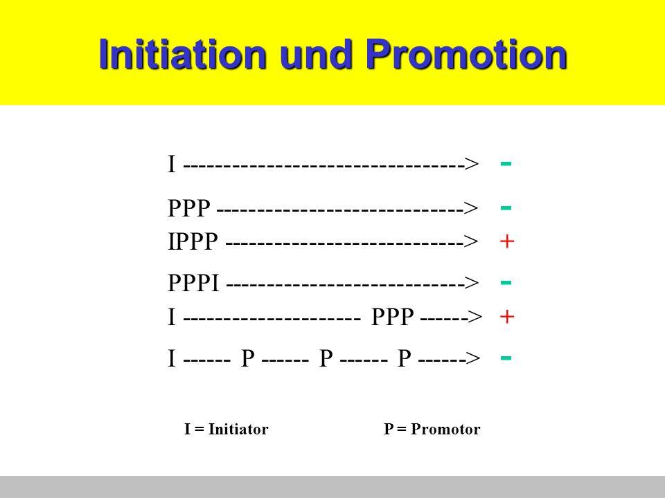 Initiation und Promotion