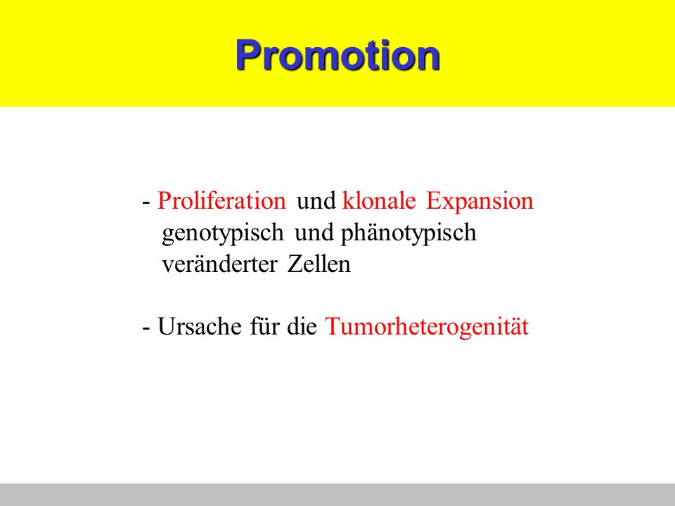 Promotion - Proliferation und klonale Expansion