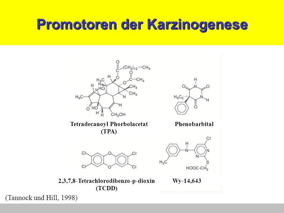 Promotoren der Karzinogenese