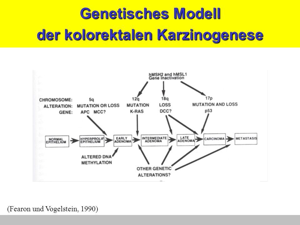 Genetisches Modell der kolorektalen Karzinogenese