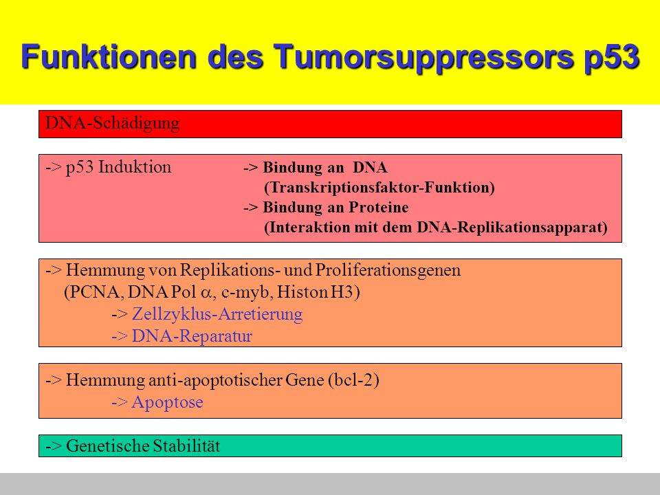 Funktionen des Tumorsuppressors p53