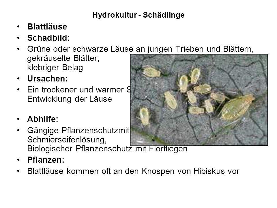 Hydrokultur - Schädlinge