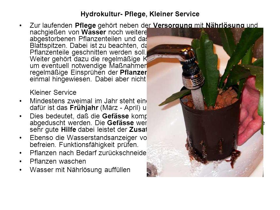 Hydrokultur- Pflege, Kleiner Service