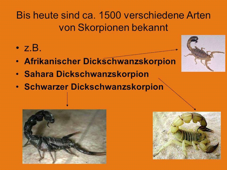 Bis heute sind ca. 1500 verschiedene Arten von Skorpionen bekannt