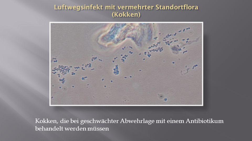 Luftwegsinfekt mit vermehrter Standortflora (Kokken)