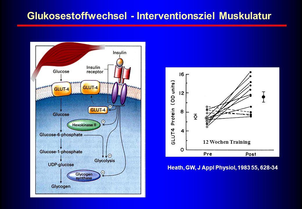 Glukosestoffwechsel - Interventionsziel Muskulatur