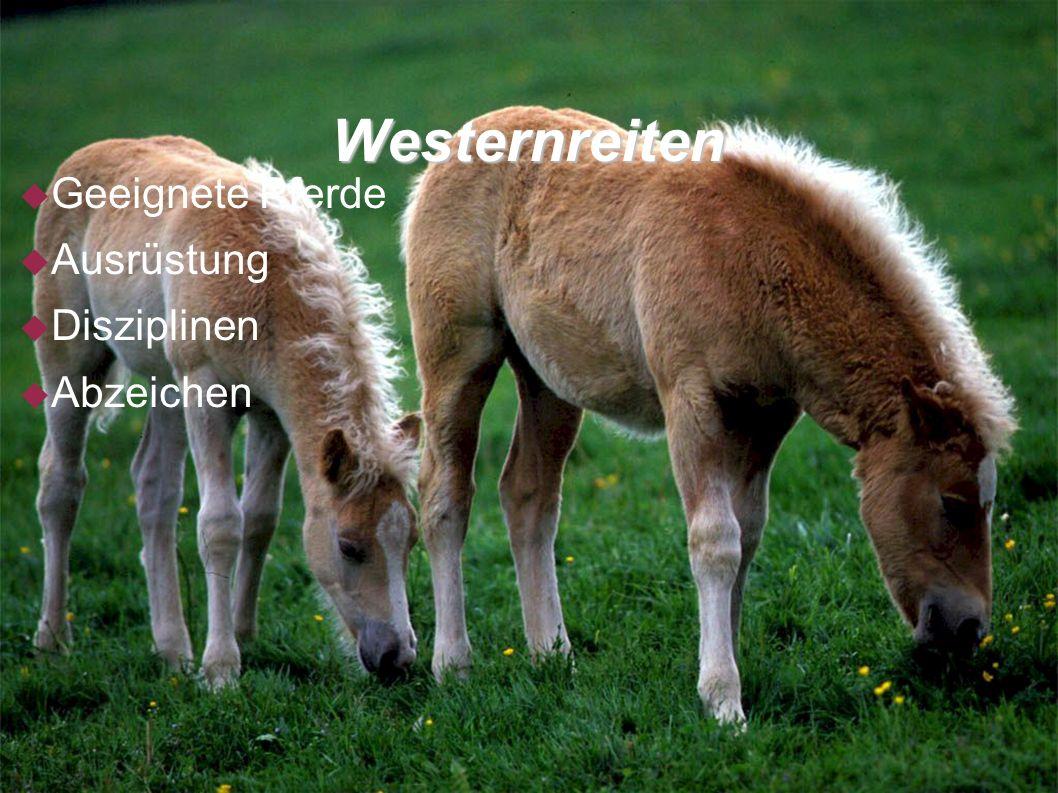 Westernreiten Geeignete Pferde Ausrüstung Disziplinen Abzeichen