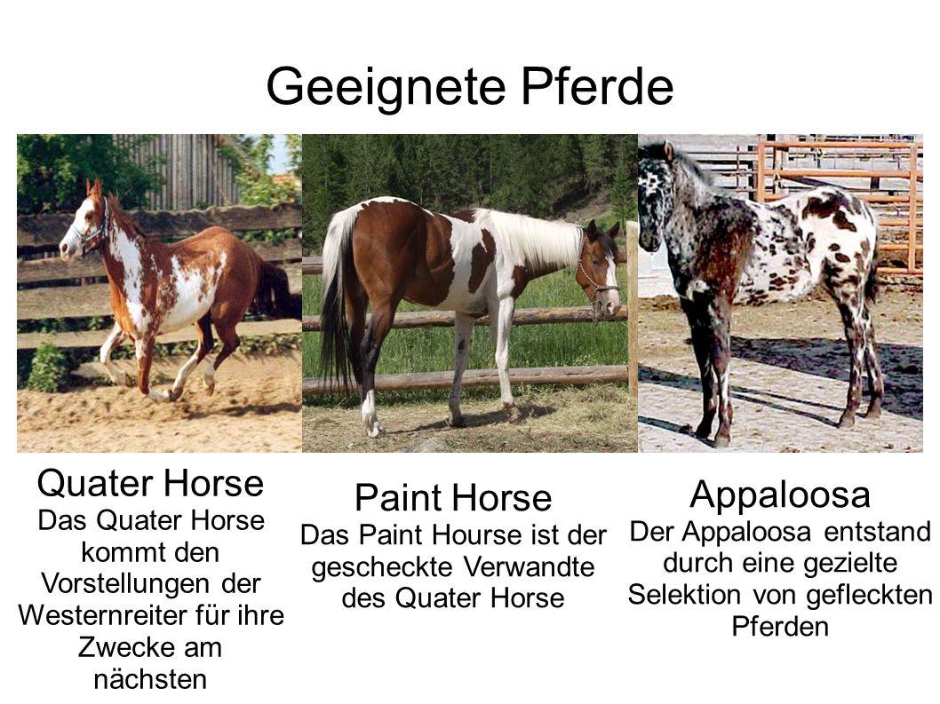 Das Paint Hourse ist der gescheckte Verwandte des Quater Horse