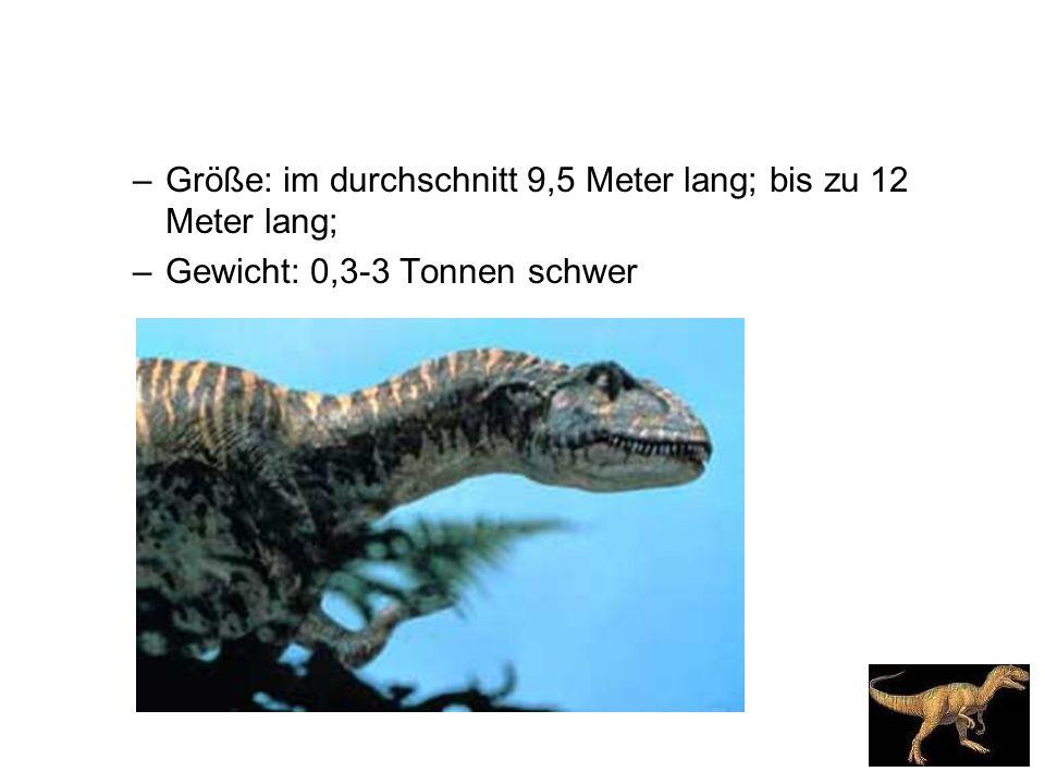 Größe: im durchschnitt 9,5 Meter lang; bis zu 12 Meter lang;
