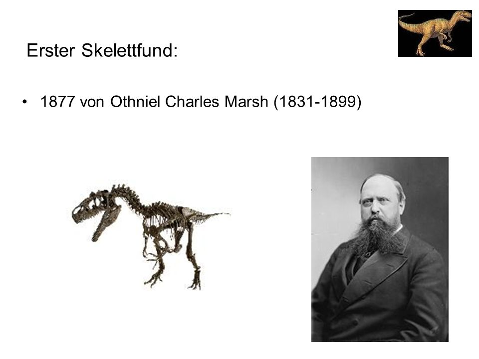 Erster Skelettfund: 1877 von Othniel Charles Marsh (1831-1899)