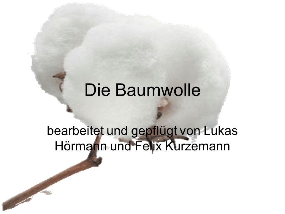 bearbeitet und gepflügt von Lukas Hörmann und Felix Kurzemann