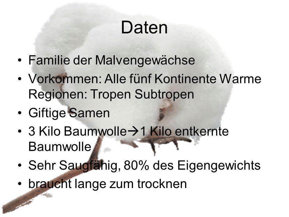 Daten Familie der Malvengewächse