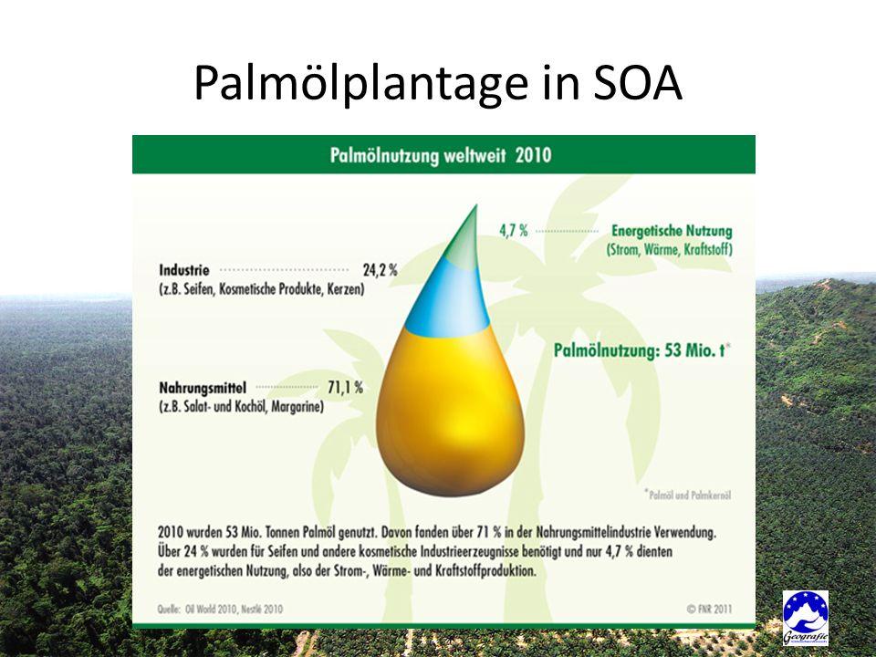 Palmölplantage in SOA