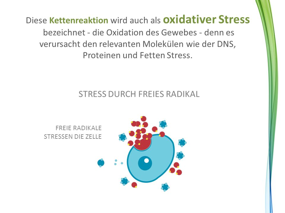 STRESS DURCH FREIES RADIKAL