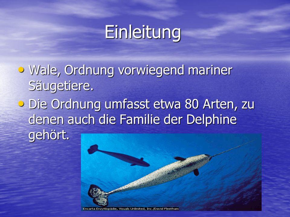 Einleitung Wale, Ordnung vorwiegend mariner Säugetiere.