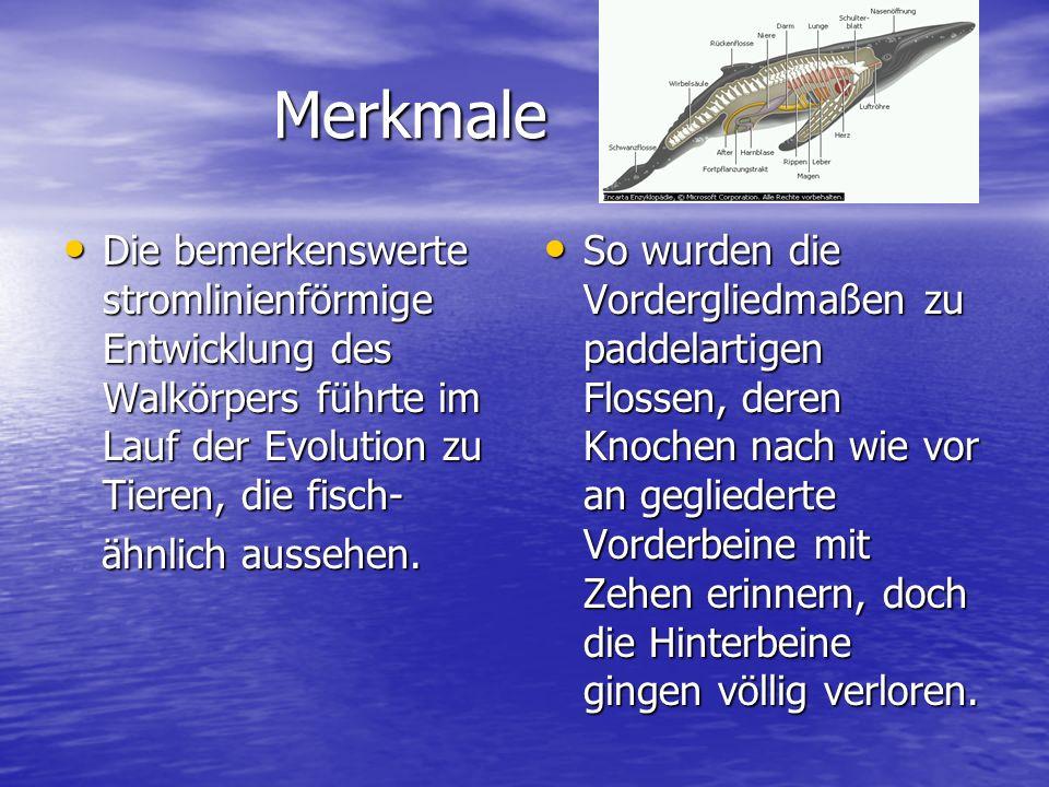 Merkmale Die bemerkenswerte stromlinienförmige Entwicklung des Walkörpers führte im Lauf der Evolution zu Tieren, die fisch-
