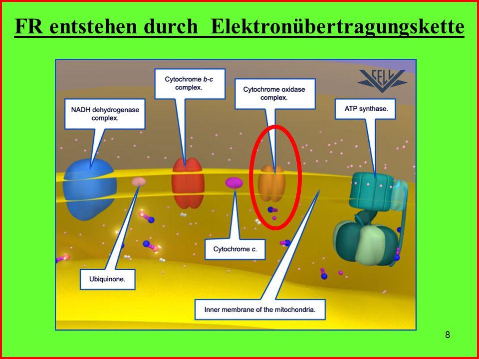 FR entstehen durch Elektronübertragungskette