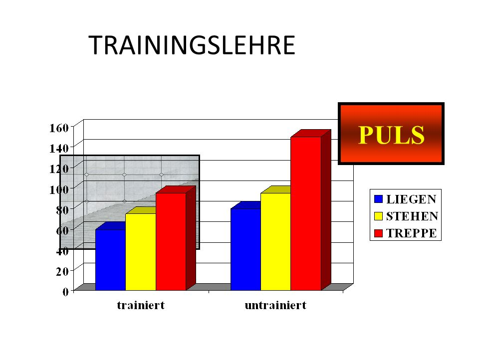TRAININGSLEHRE PULS