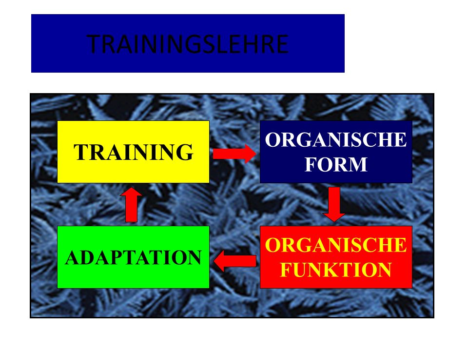 TRAININGSLEHRE TRAINING TRAINING ORGANISCHE FORM ORGANISCHE ADAPTATION