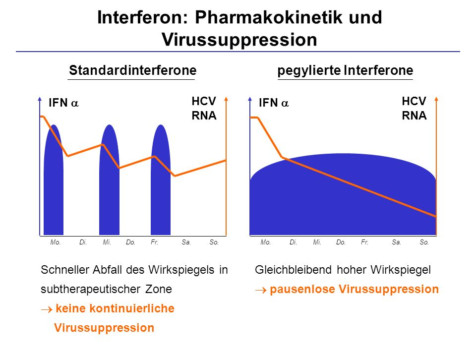 Interferon: Pharmakokinetik und Virussuppression