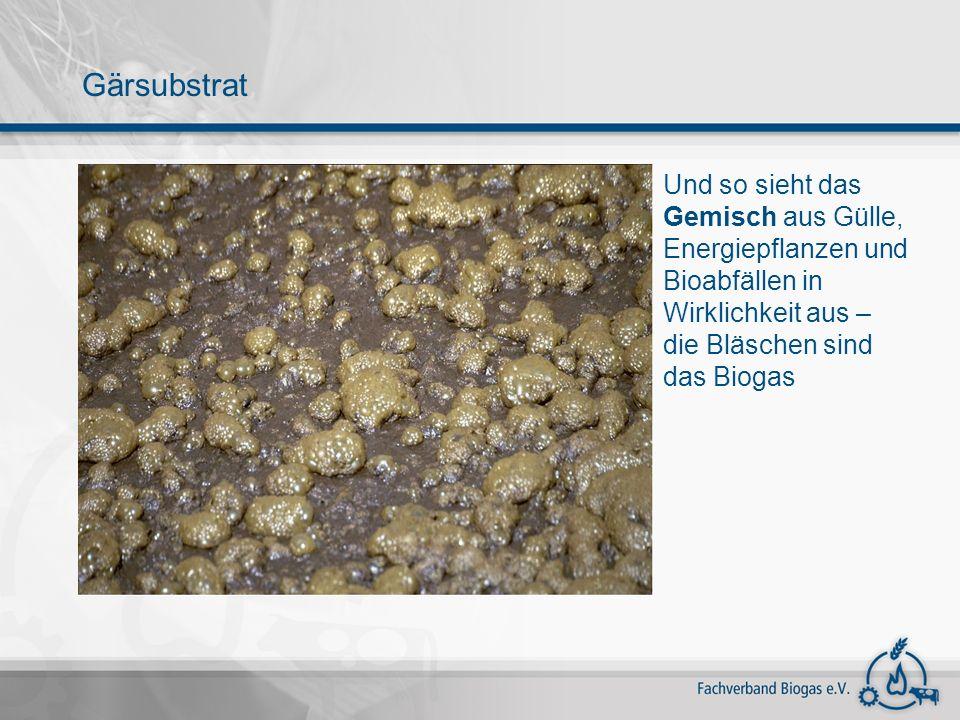 Gärsubstrat Und so sieht das Gemisch aus Gülle, Energiepflanzen und Bioabfällen in Wirklichkeit aus – die Bläschen sind das Biogas.
