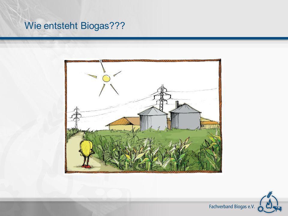 Wie entsteht Biogas