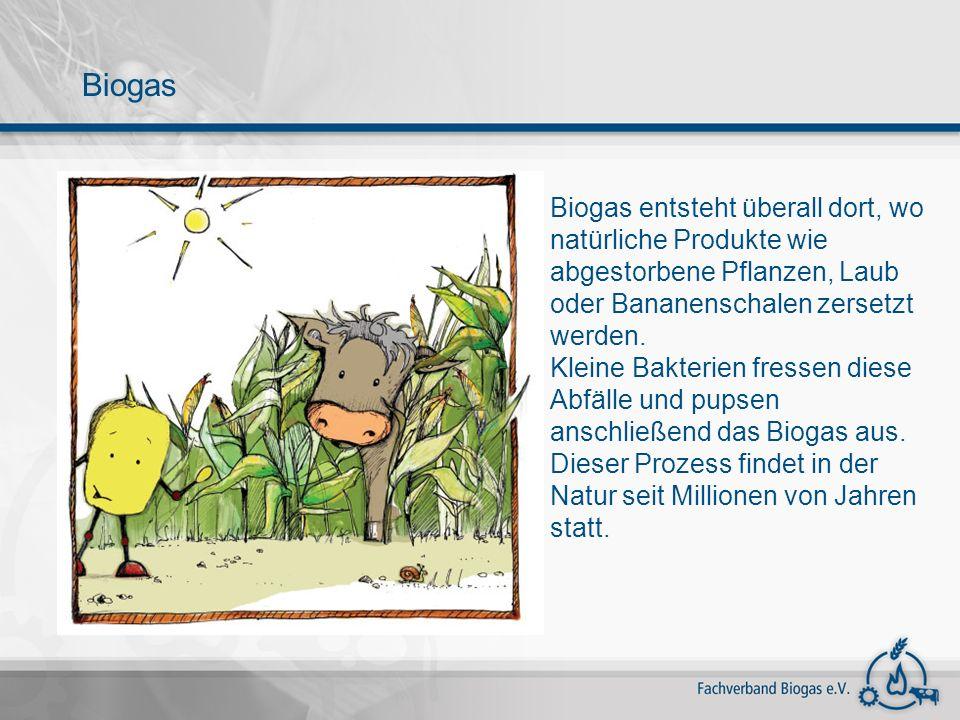 Biogas Biogas entsteht überall dort, wo natürliche Produkte wie abgestorbene Pflanzen, Laub oder Bananenschalen zersetzt werden.