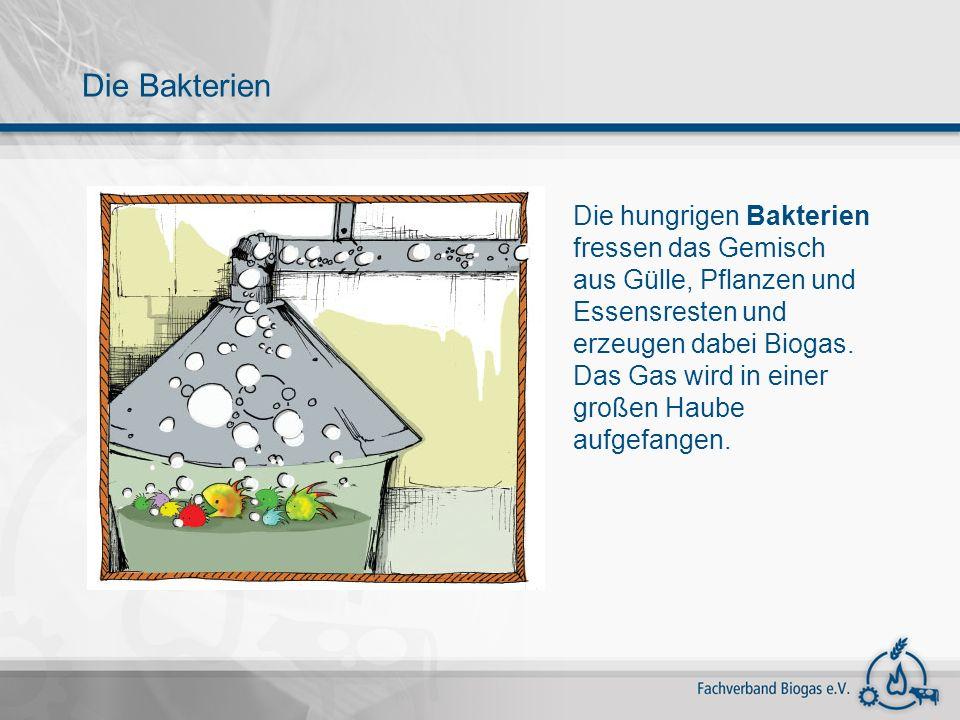 Die Bakterien Die hungrigen Bakterien fressen das Gemisch aus Gülle, Pflanzen und Essensresten und erzeugen dabei Biogas.