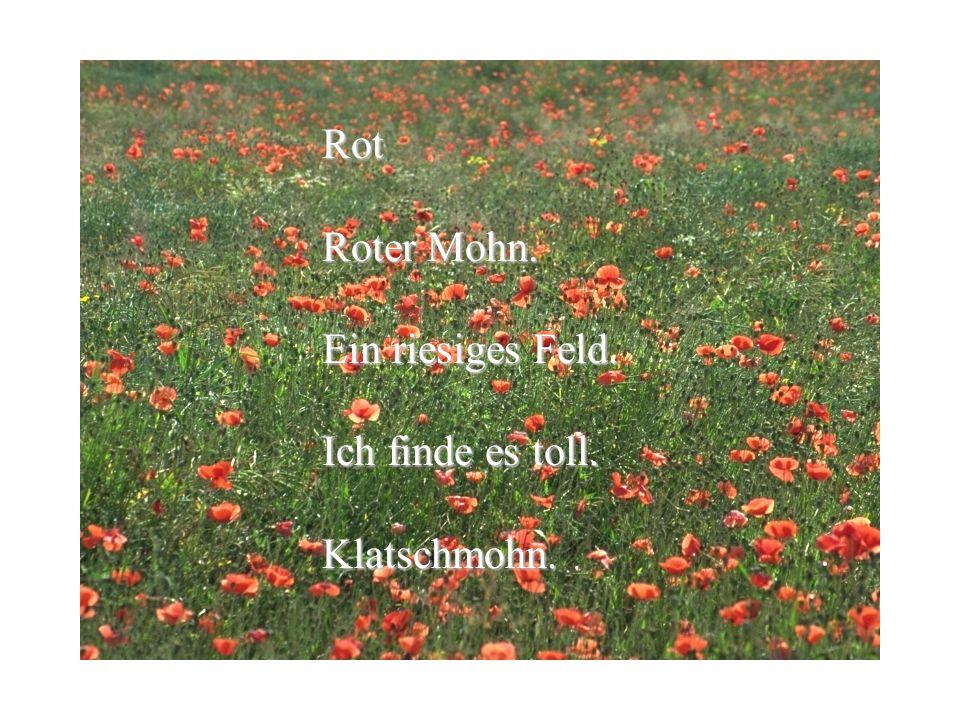 Rot Roter Mohn. Ein riesiges Feld. Ich finde es toll. Klatschmohn.