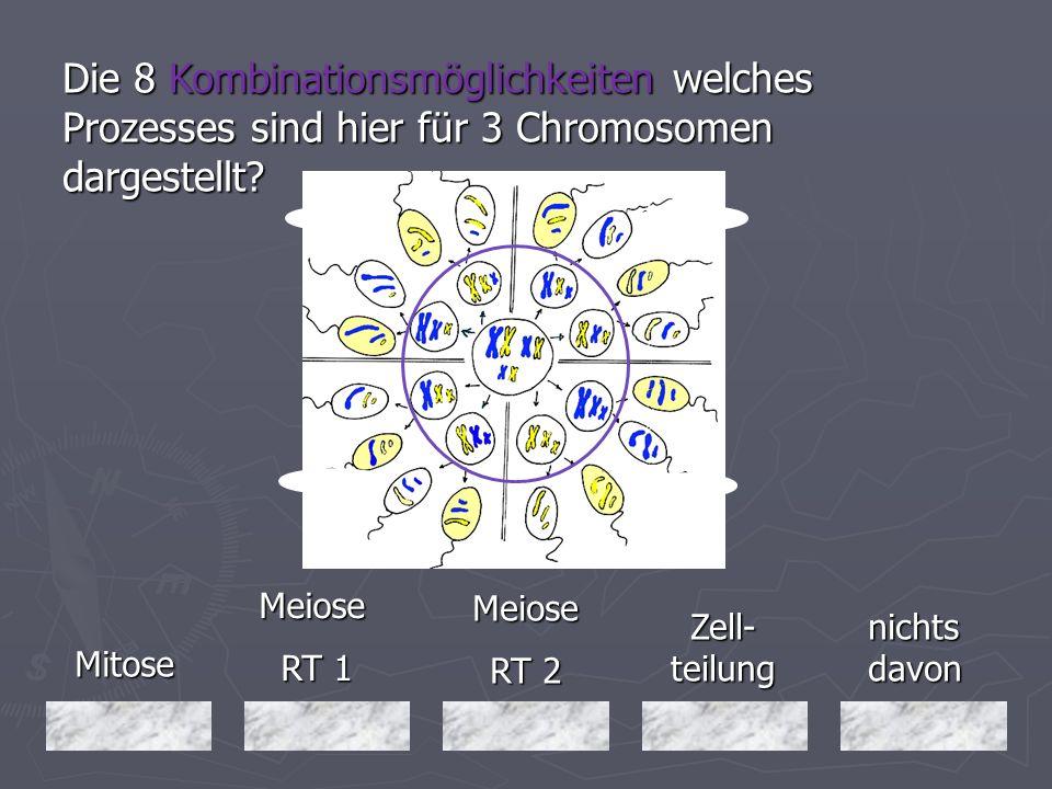 Die 8 Kombinationsmöglichkeiten welches Prozesses sind hier für 3 Chromosomen dargestellt