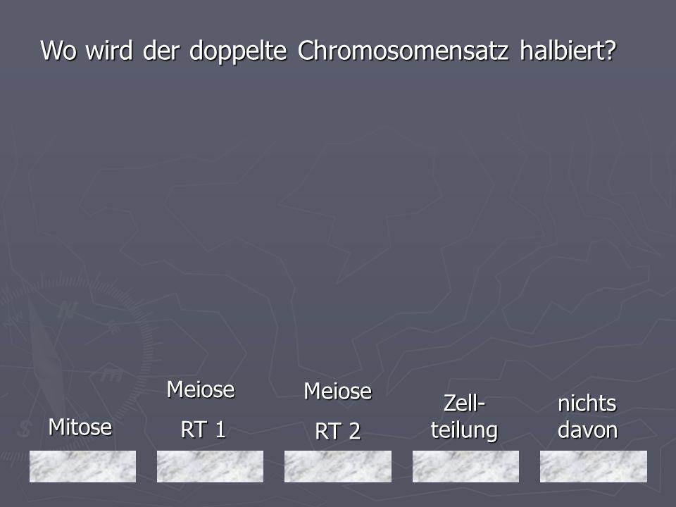 Wo wird der doppelte Chromosomensatz halbiert