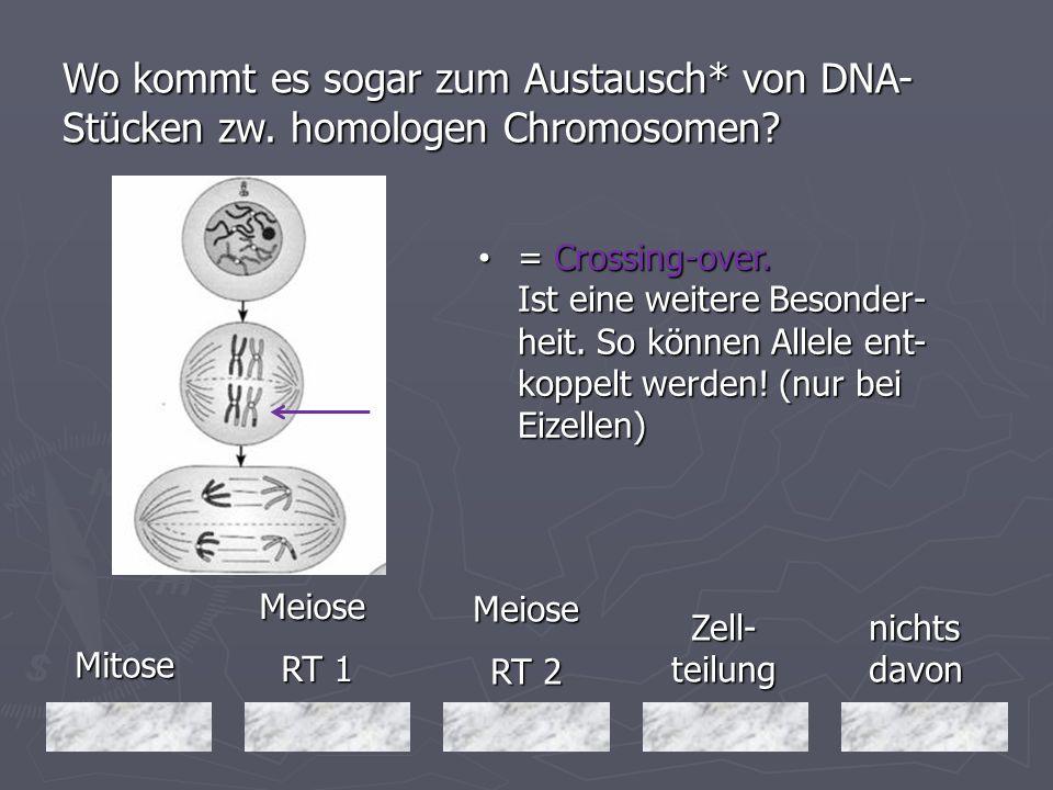 Wo kommt es sogar zum Austausch. von DNA-Stücken zw