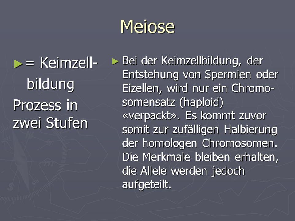 Meiose = Keimzell- bildung Prozess in zwei Stufen