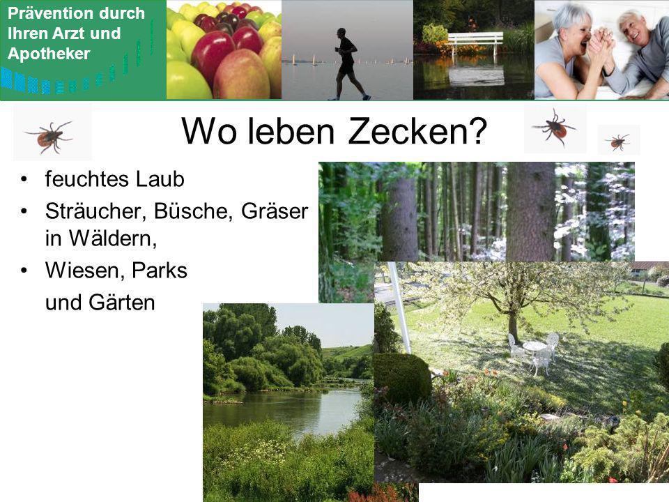 Wo leben Zecken feuchtes Laub Sträucher, Büsche, Gräser in Wäldern,