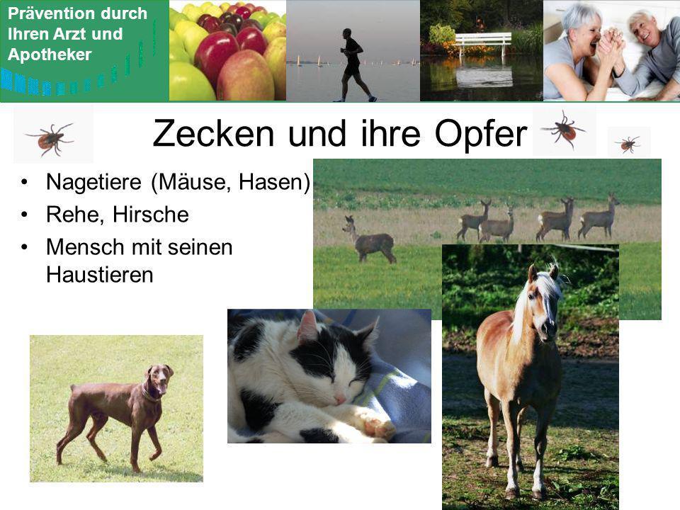 Zecken und ihre Opfer Nagetiere (Mäuse, Hasen) Rehe, Hirsche