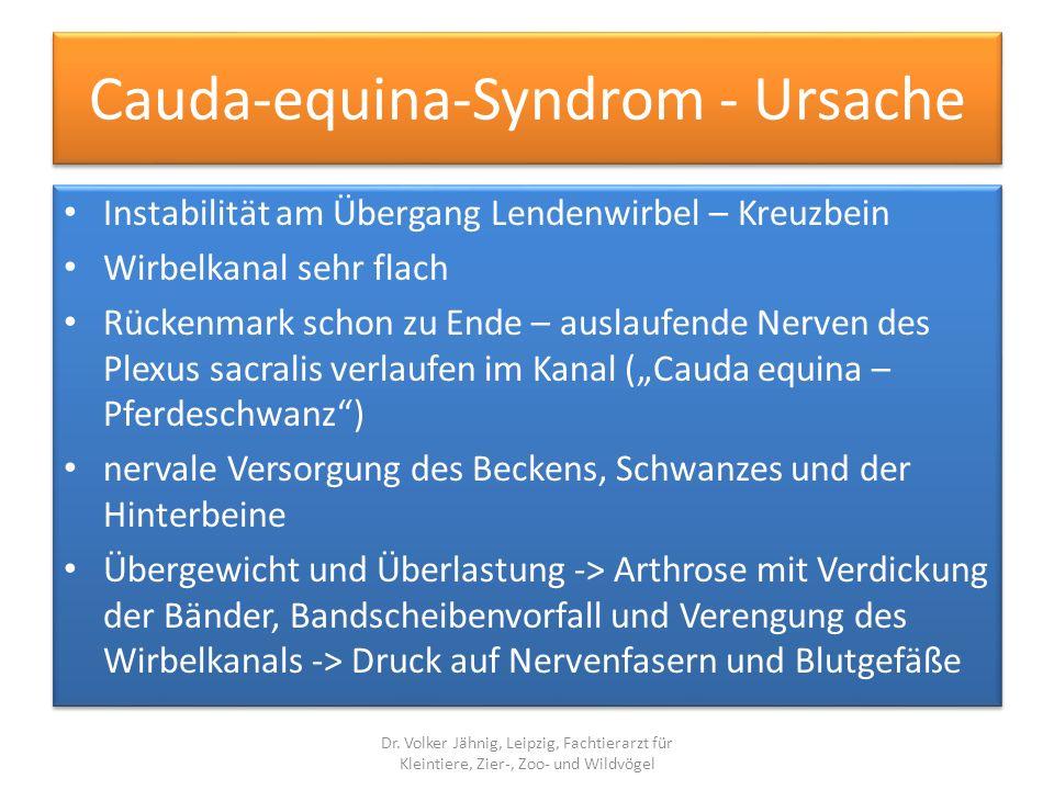 Cauda-equina-Syndrom - Ursache