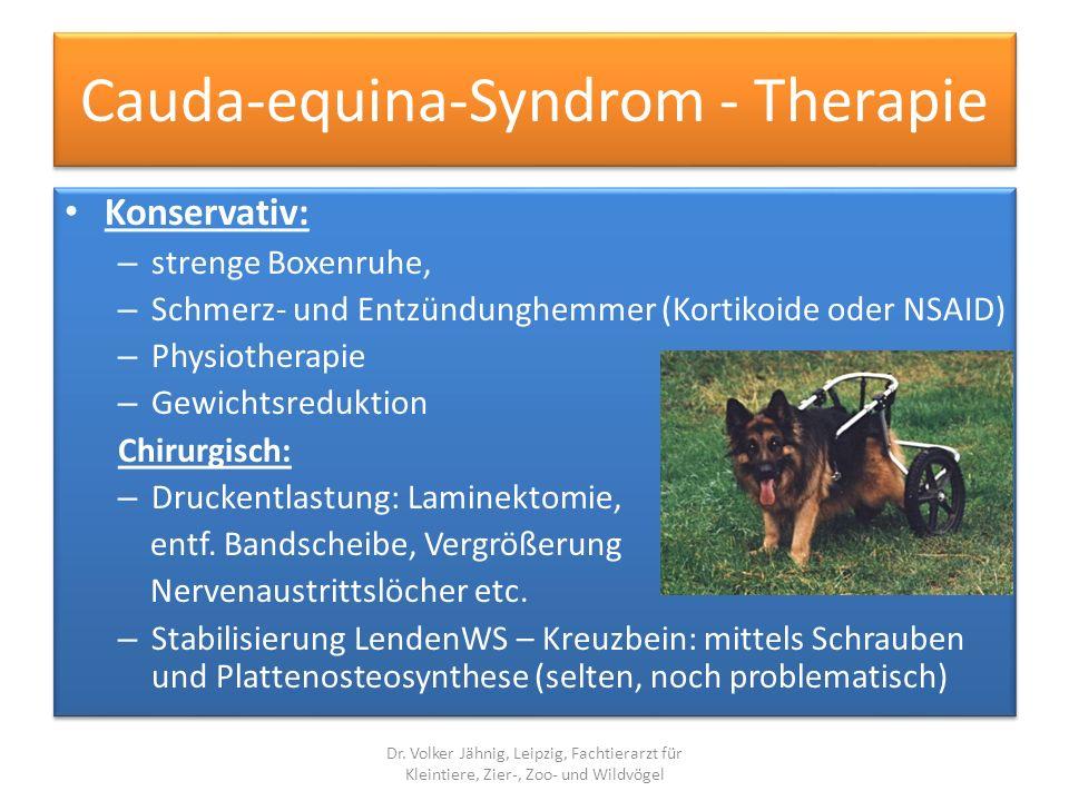 Cauda-equina-Syndrom - Therapie