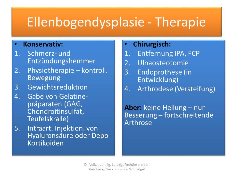 Ellenbogendysplasie - Therapie
