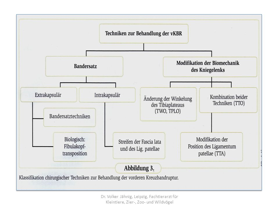 Dr. Volker Jähnig, Leipzig, Fachtierarzt für Kleintiere, Zier-, Zoo- und Wildvögel