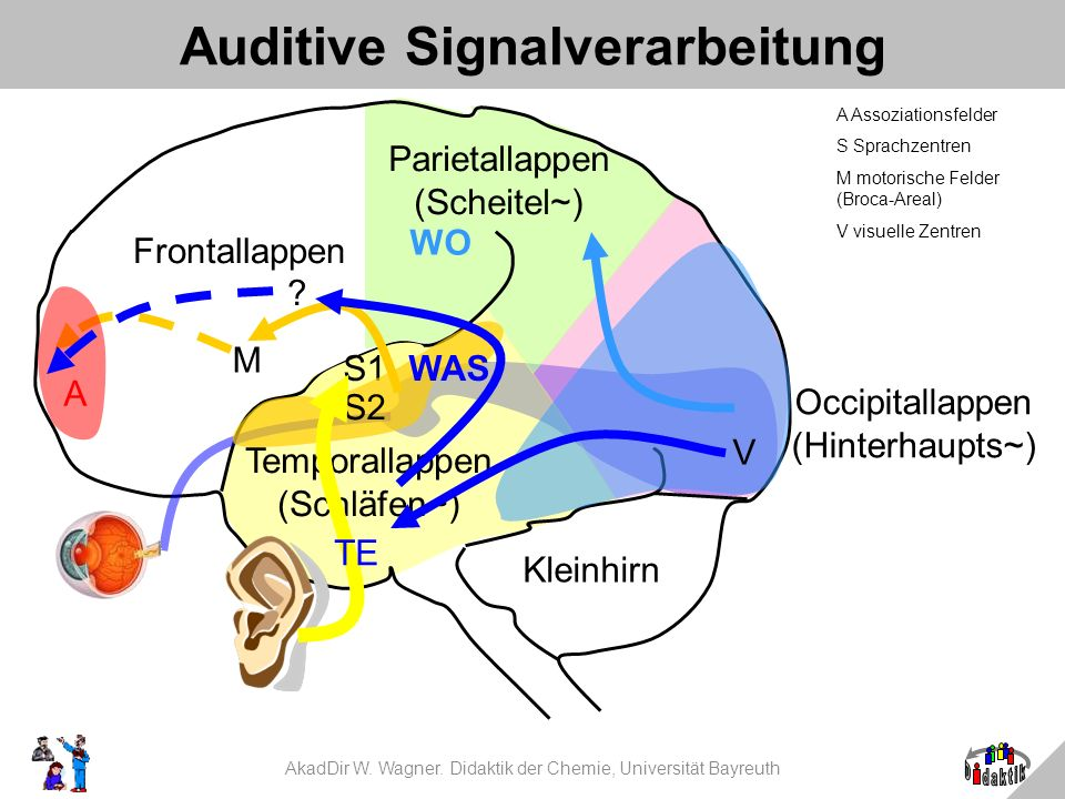 Auditive Signalverarbeitung
