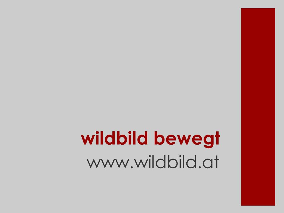 wildbild bewegt www.wildbild.at