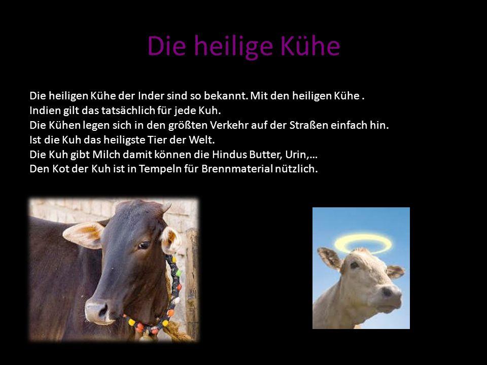 Die heilige Kühe Die heiligen Kühe der Inder sind so bekannt. Mit den heiligen Kühe . Indien gilt das tatsächlich für jede Kuh.