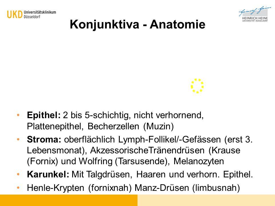 Konjunktiva - Anatomie