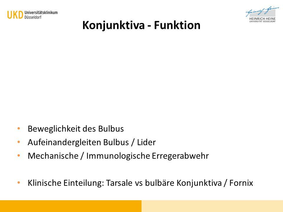 Konjunktiva - Funktion