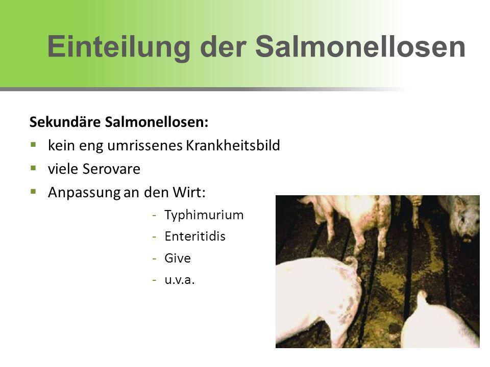 Einteilung der Salmonellosen