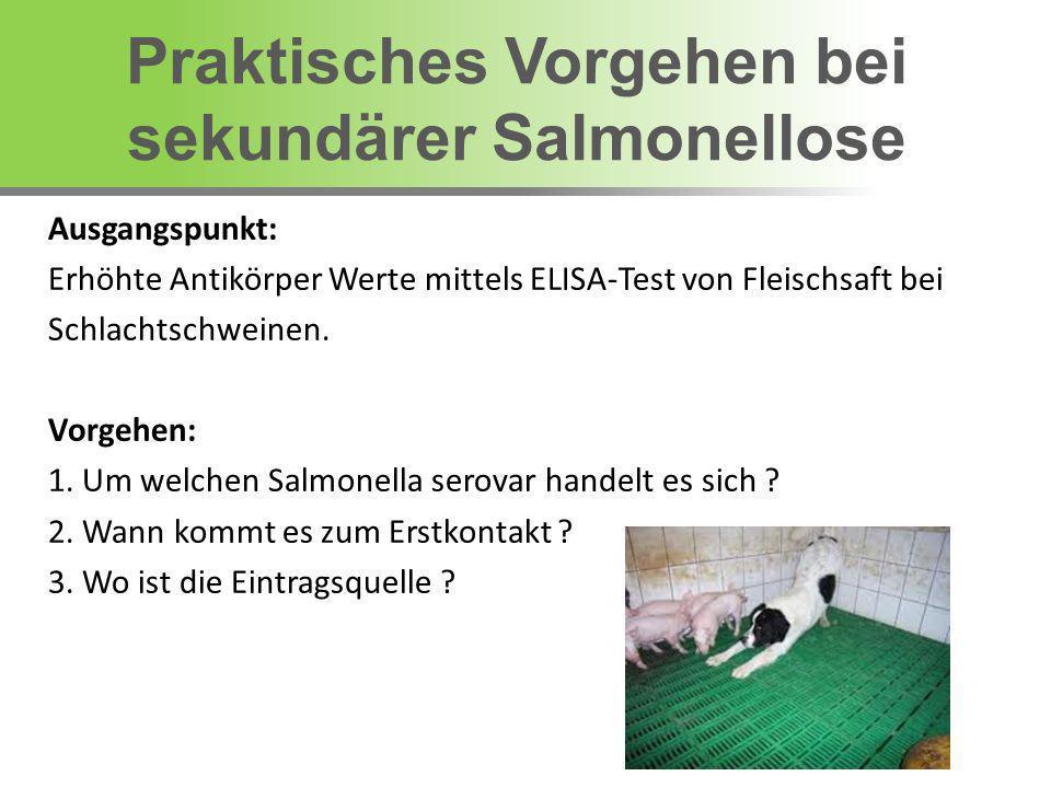 Praktisches Vorgehen bei sekundärer Salmonellose