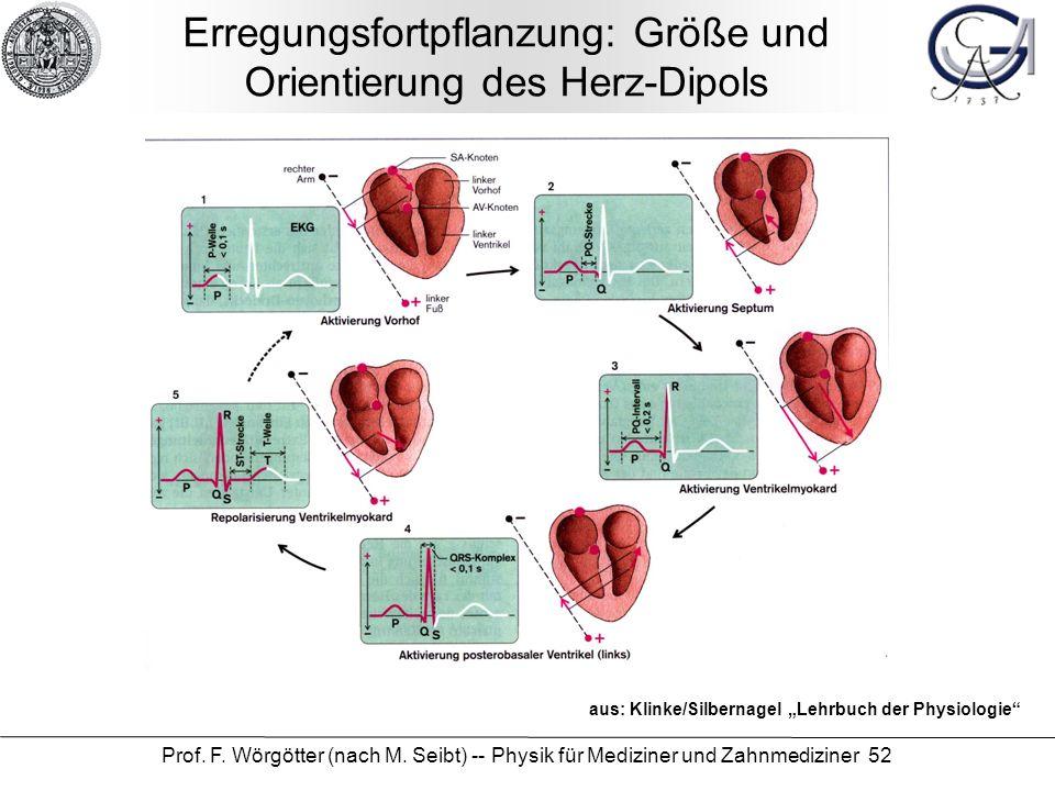 Erregungsfortpflanzung: Größe und Orientierung des Herz-Dipols