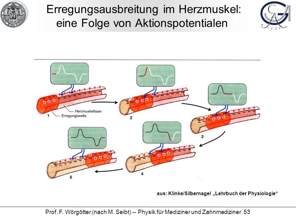 Erregungsausbreitung im Herzmuskel: eine Folge von Aktionspotentialen